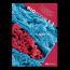 BIOgenie 5.2 - leerboek